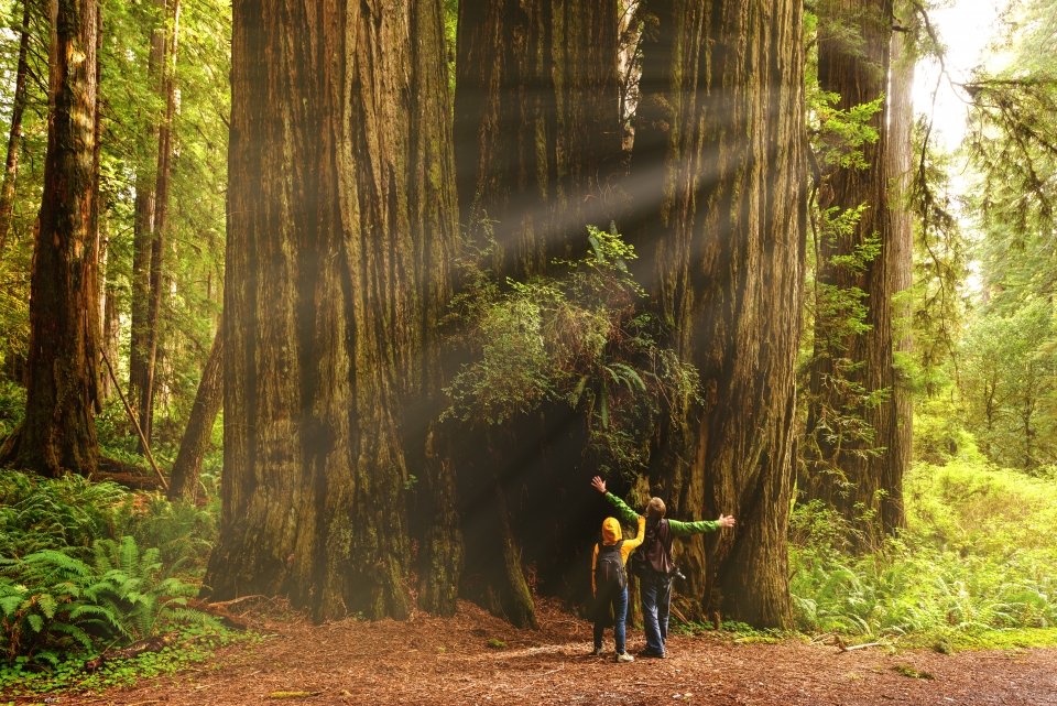 Two kids look up at a redwood, with their arms outstretched