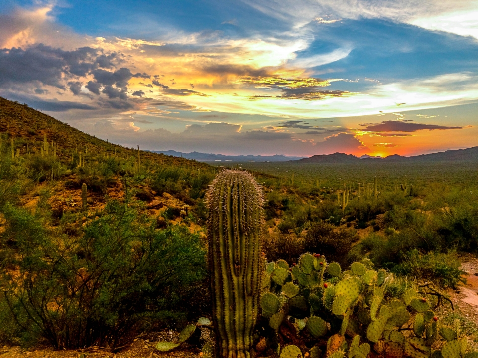 Colorful sunset over the cactuses of Saguaro National Park