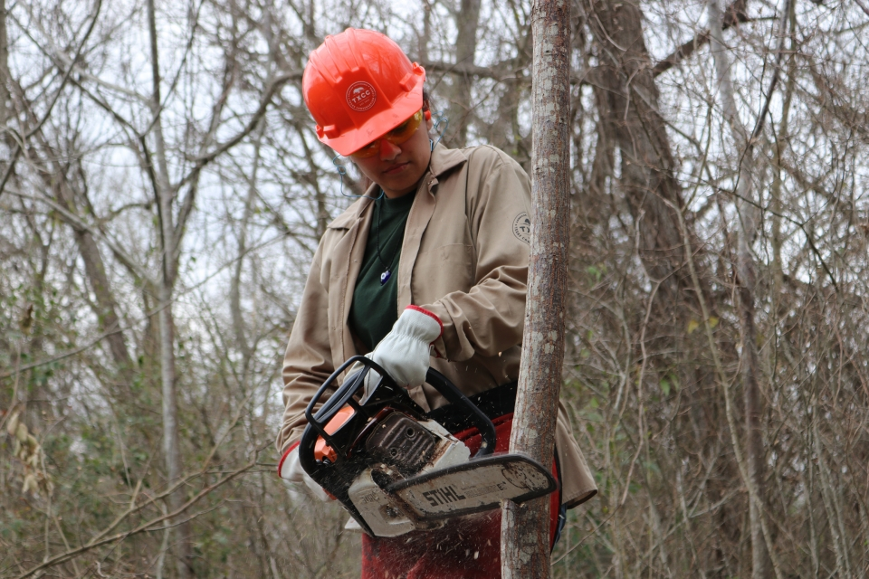 Karli Tirapelle wears an orange hardhat as she uses a chainsaw to cut down a tree.