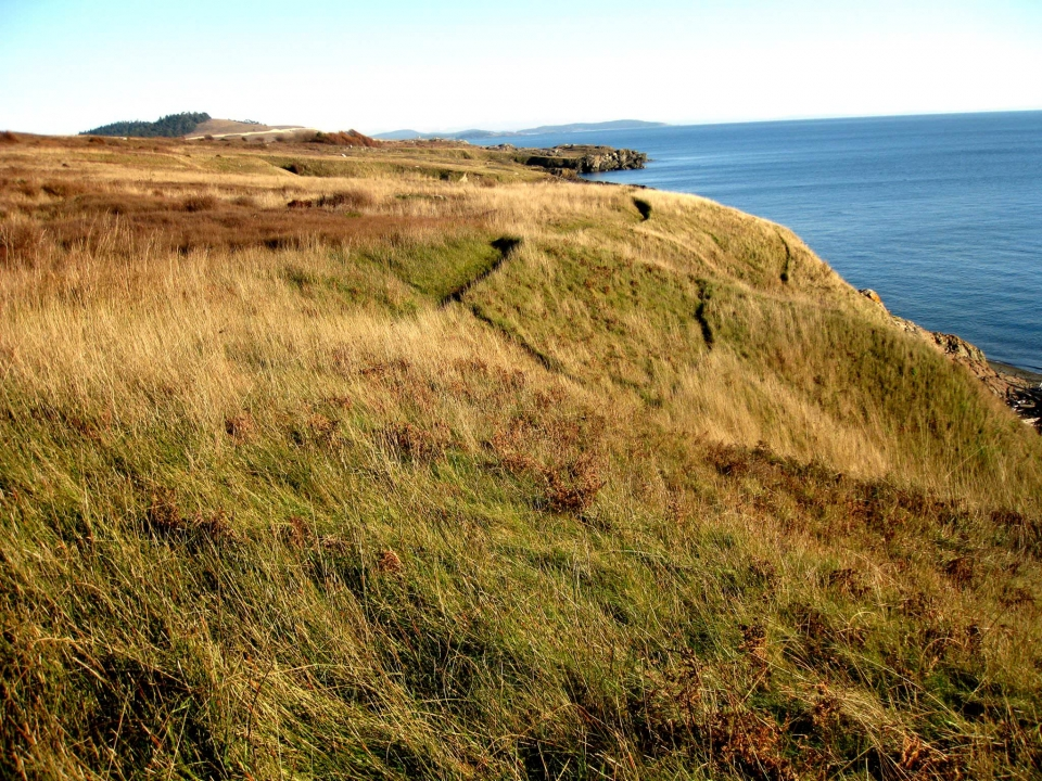 Bluff trail amongst yellow and green grass along the coast at San Juan Islands National Historical Park