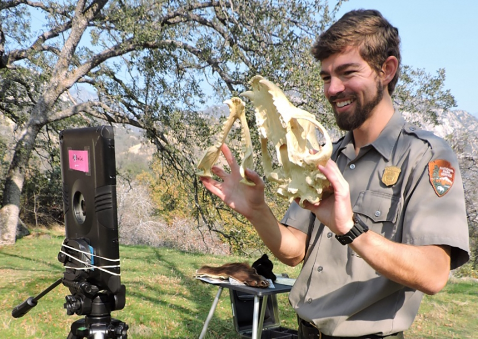 A uniformed ranger holds up a bear skull to a digital tablet during a distance learning lesson