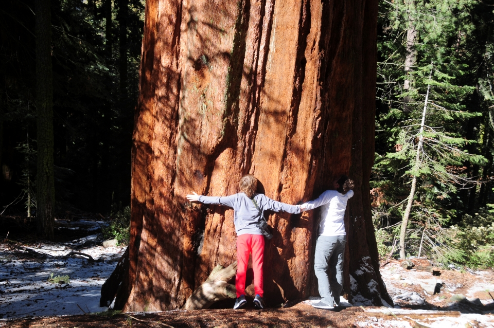 Two children hug a large sequoia tree in Sequoia and Kings Canyon National Parks