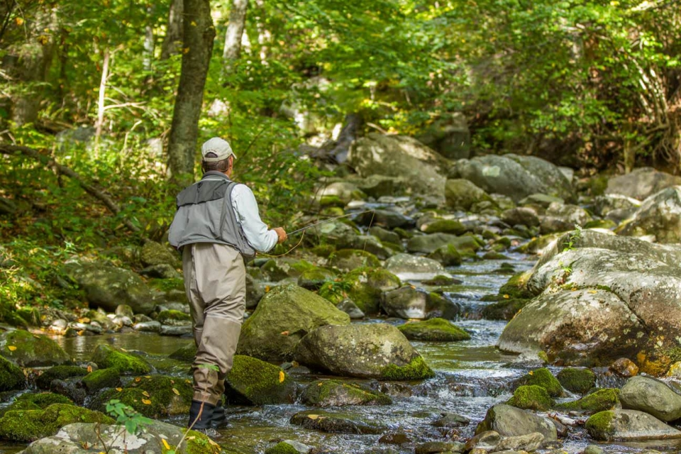 Man fly-fishing in the rocky stream in a green forest at Shenandoah National Park