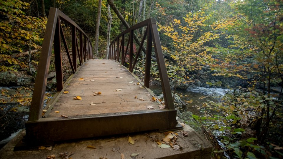 Autumnal leaves sprinkle the ground and a wooden bridge that crosses over a calm creek.