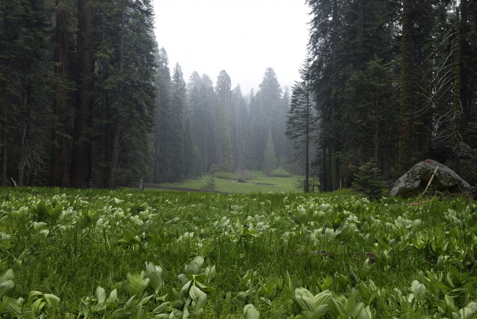 Crescent meadow at Sequoia And Kings Canyon National Parks