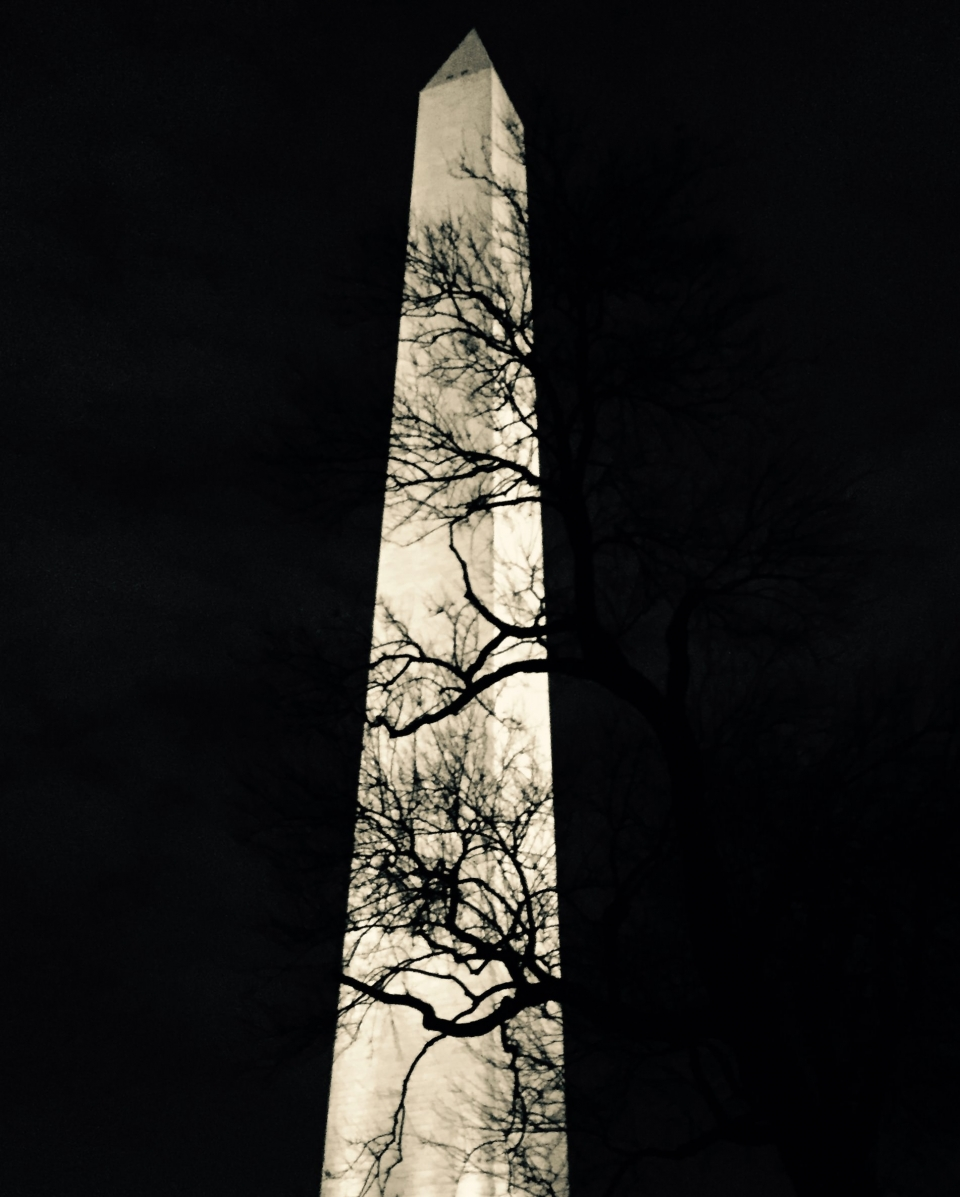 Black tree branches silhouetted against the lit Washington Monument at night
