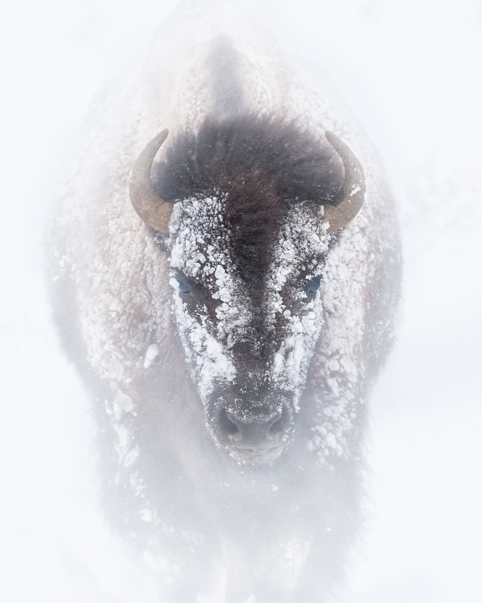Yellowstone National Park  contest image by Joe Neely