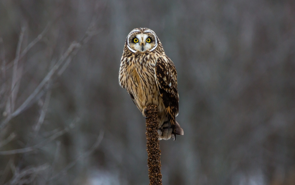 Bombay Hook National Wildlife Refuge contest image by Cecil Hastings
