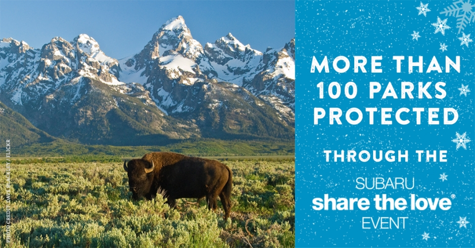 "Bison standing in a meadow with a mountain range behind. Text says ""100 Parks Protected Through the Subaru Share the Love Event"""
