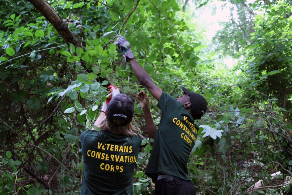 Two people from the Veterans Conservation Corps removing invasive species at Theodore Roosevelt Island