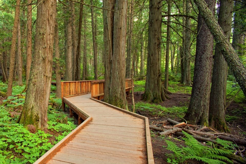 The Trail of the Cedars boardwalk at Glacier National Park
