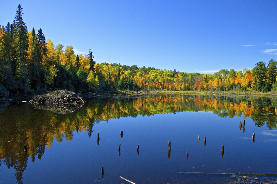 Green, orange, and yellow trees lining the shore of a calm lake reflecting the blue skies at Voyageurs National Park