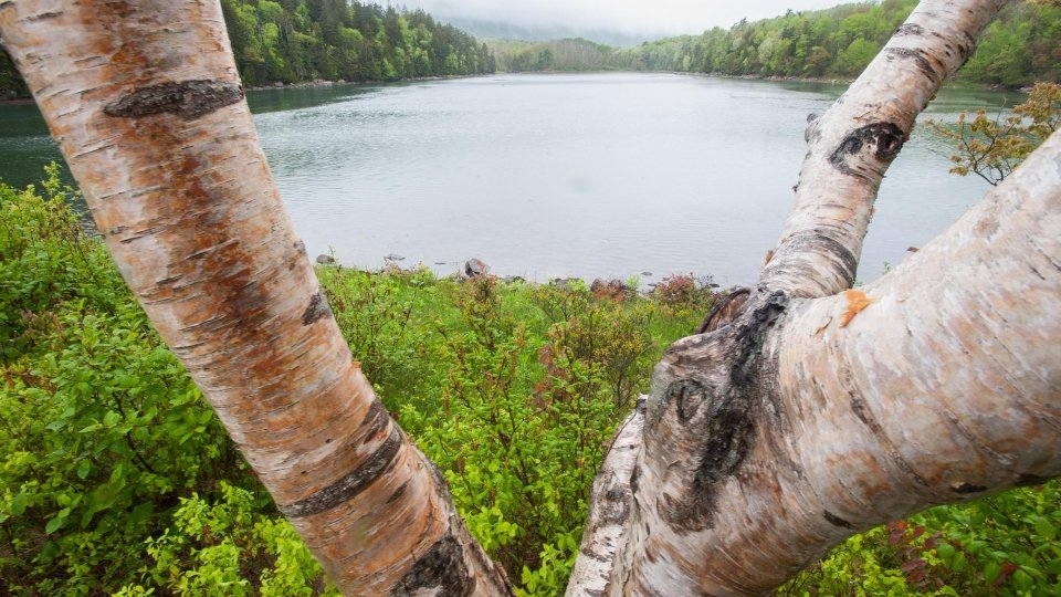 A view of the Hudson River between birch branches at the Hudson River Valley National Heritage Area