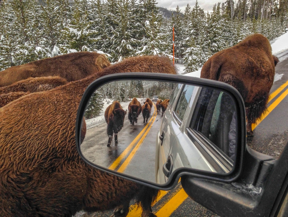 Looking at outside rear mirror with bison in it