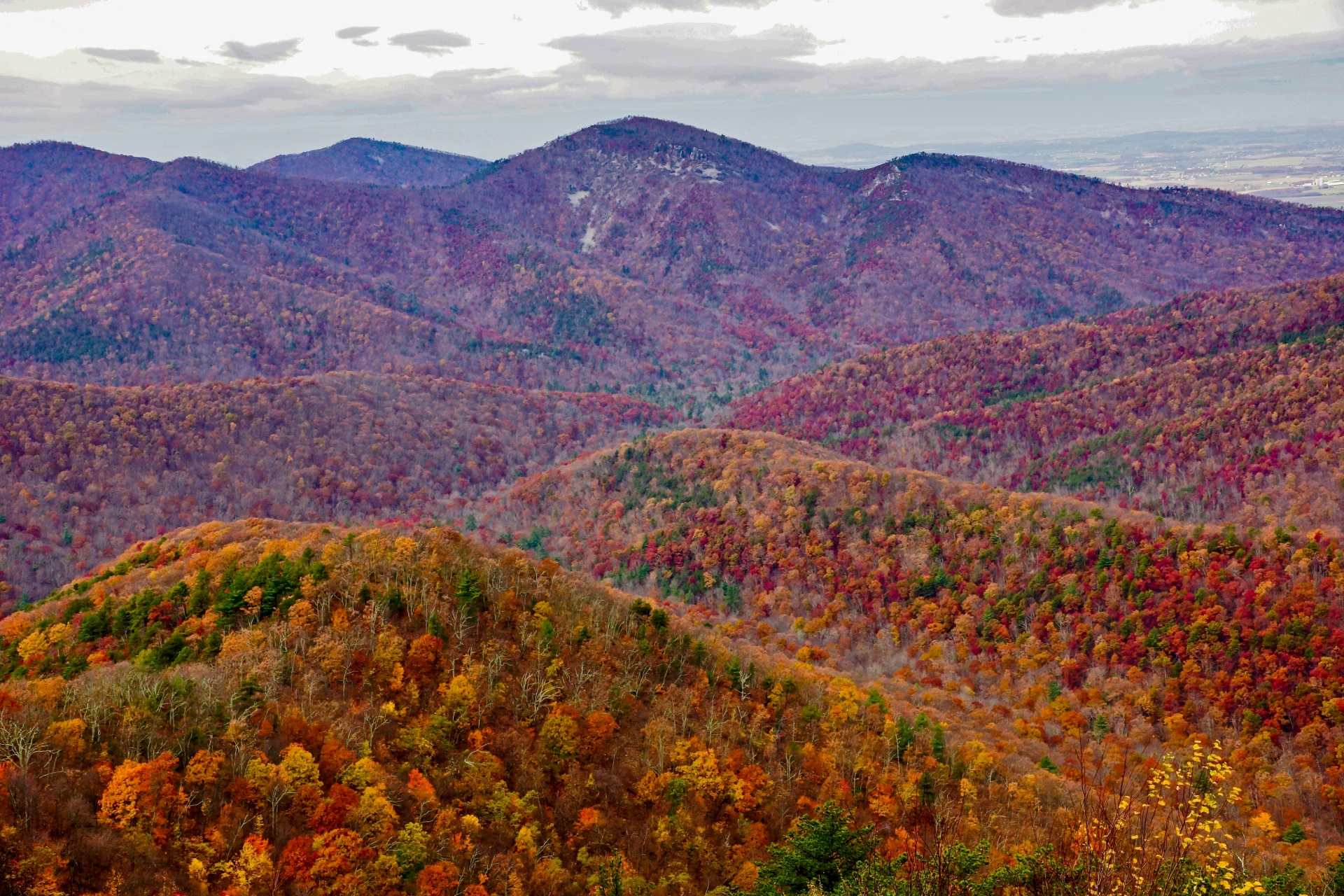 Autumn foliage along Skyline Drive