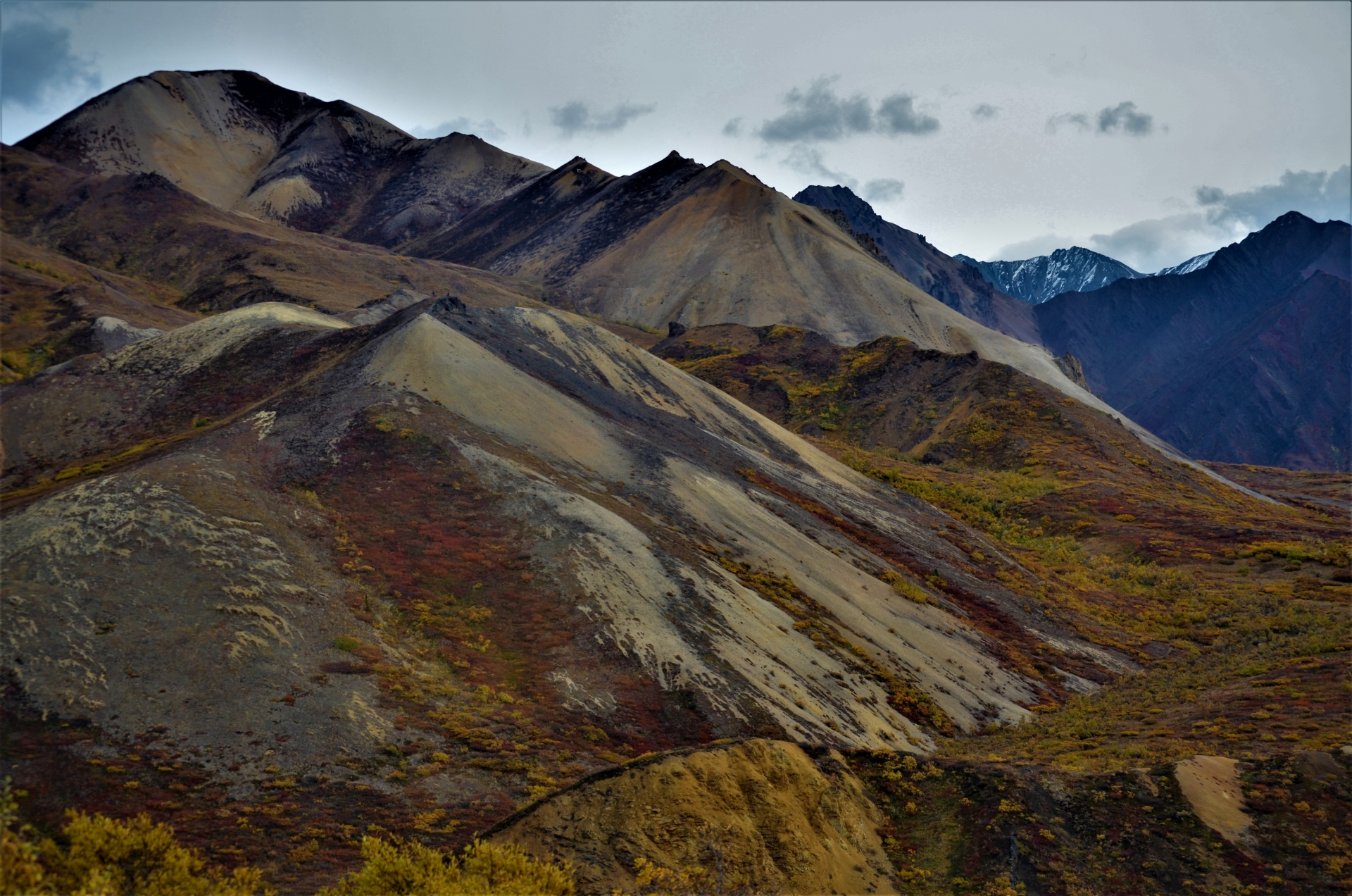 Denali Park and Preserve in the Fall