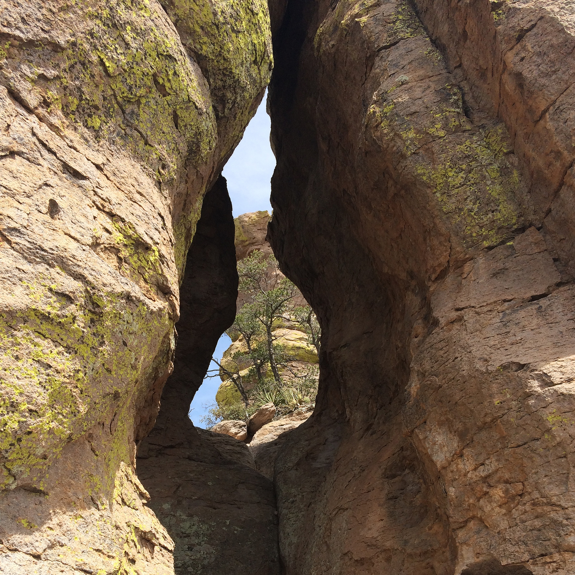 Trees growing out of rocks and are framed by a peek through a crevice