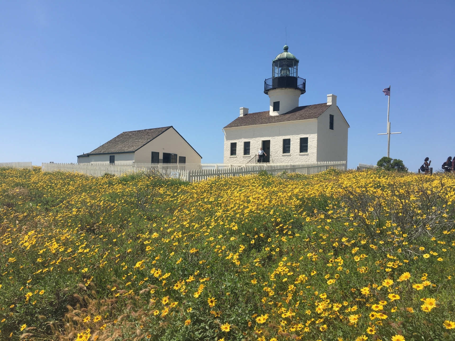 #PointLomaLighthouse,#RosiePhillips,#Cabrillo,#wildflowers