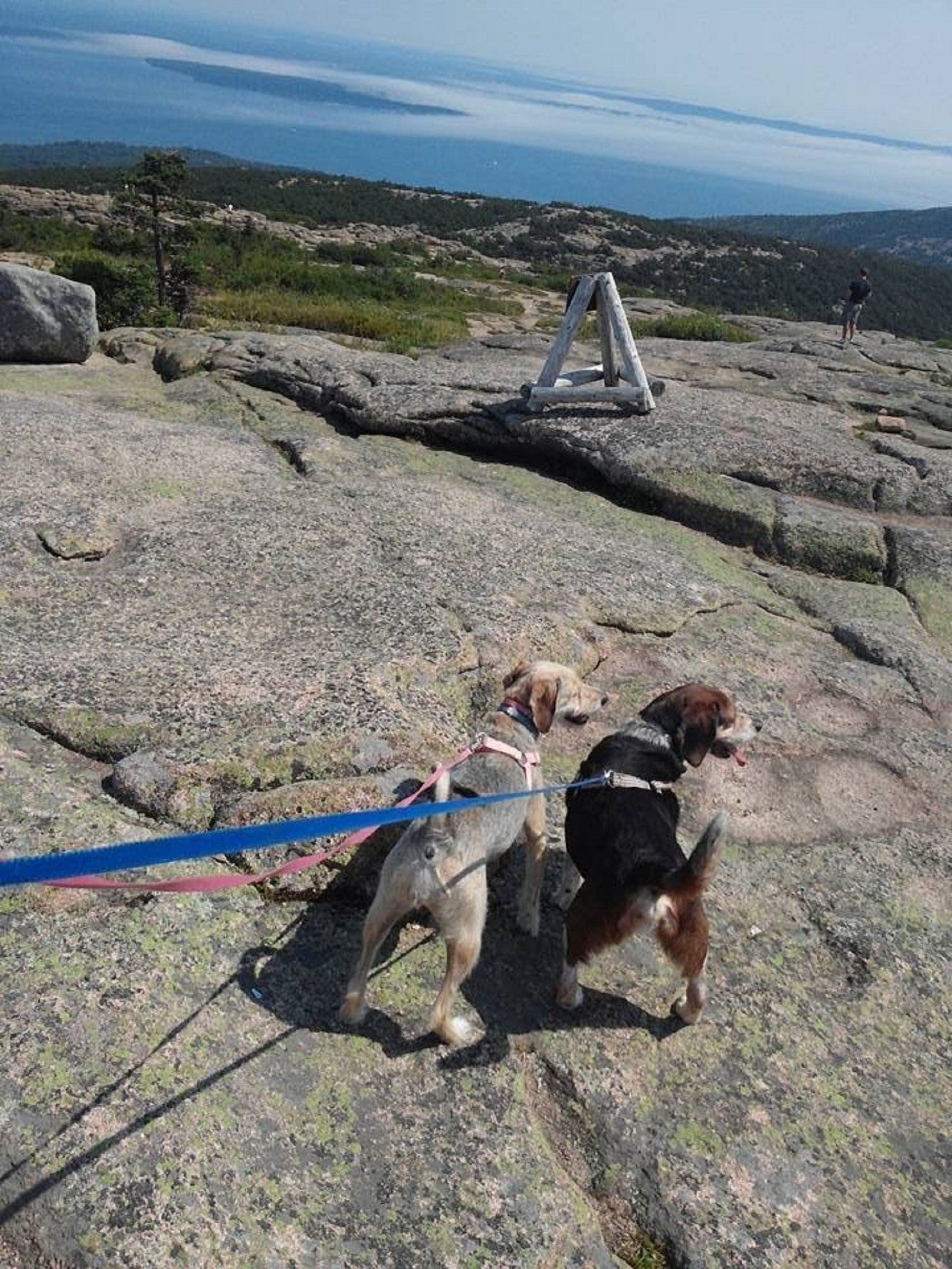 Kiwi and Rocky on the look out at Acadia National Park 2015