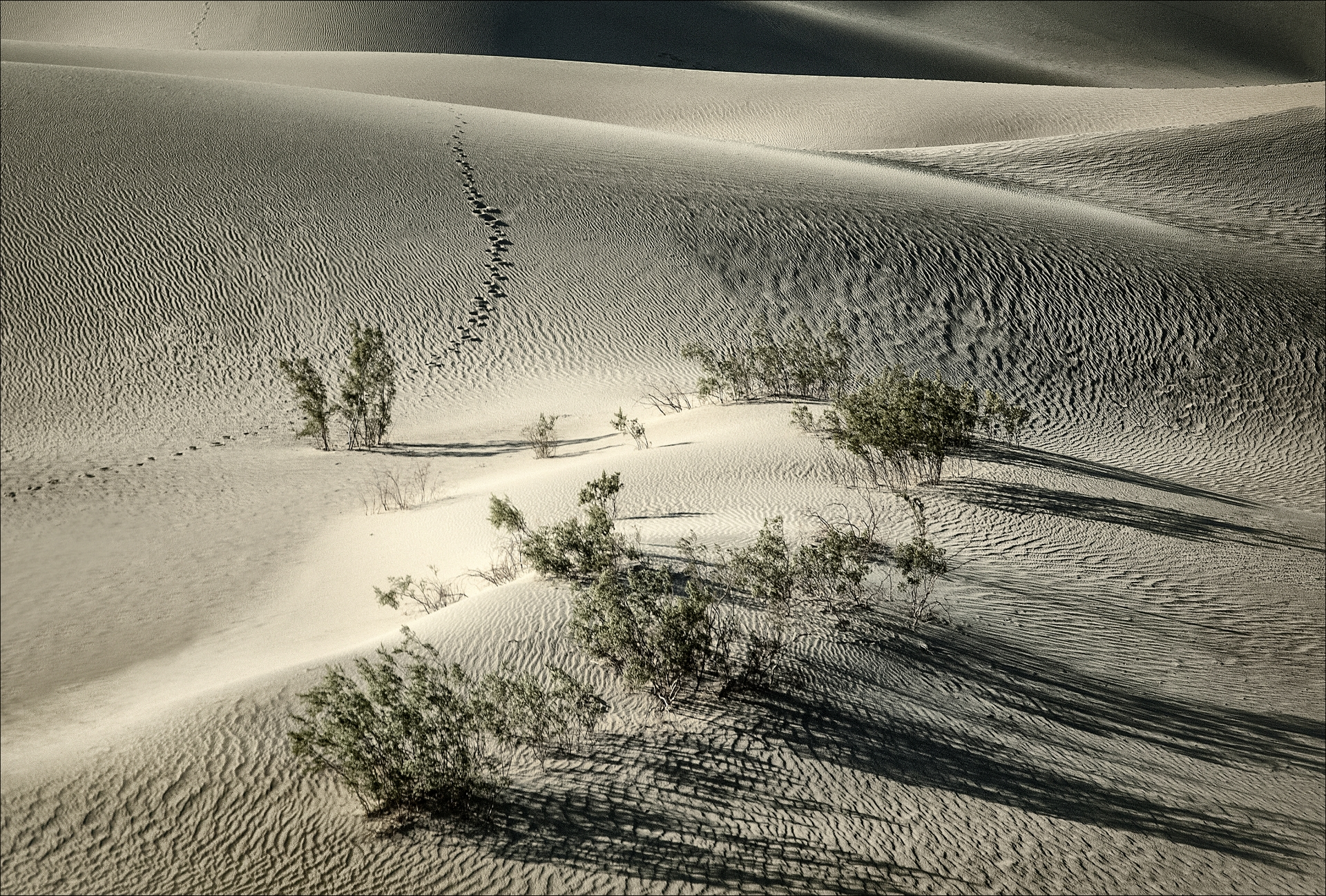 Trees in the Sand Dunes