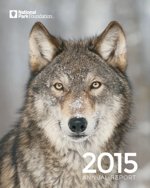 Wolf in snow on cover of FY15 Annual Report