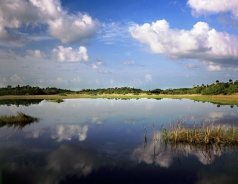 Lakeshore at Big Cypress National Preserve in Florida.