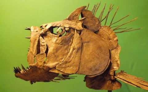 Ancient fish fossil