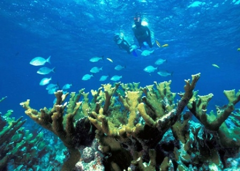 Snorkelers and coral in waters of Biscayne National Park