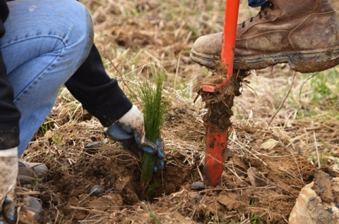 Close up of volunteers planting trees