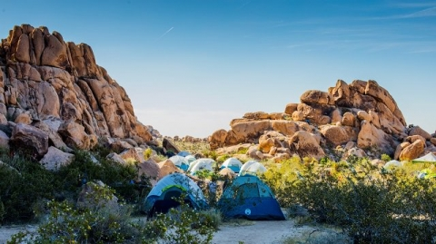 Cluster of Camping Tents at Coleman National Park