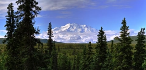 Mountains and pine trees of Denali National Park and Preserve.