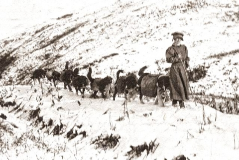 Pioneer Fannie Quigley with pack of dogs