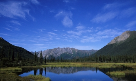 Gates of the Arctic National Park and Preserve, trees and mountains