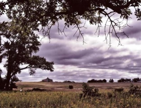 Prairie with clouds and trees