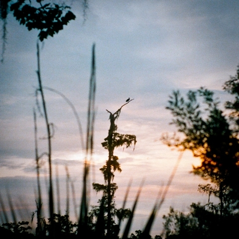 Sunset along the riverfront at Jean Lafitte National Historical Park and Preserve in Louisiana