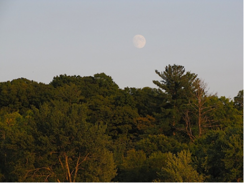 Trees under the moon along the St. Croix river