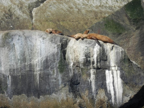 Sea lions basking on rocks