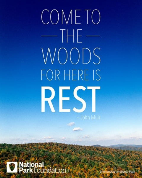 """Image of Muir quote, """"Come to the woods, for here is rest."""""""