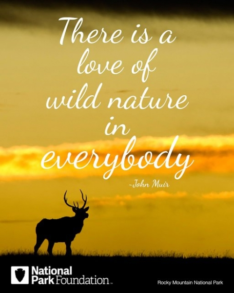 """Image of deer with quote, """"There is a love of wild nature in everybody."""""""