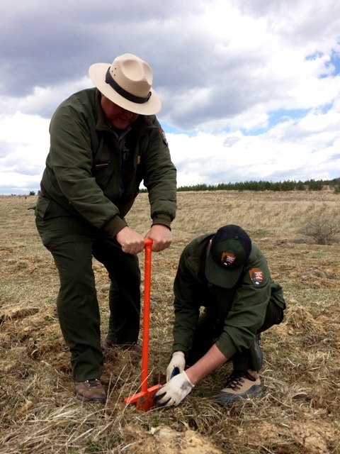 Park rangers planting trees at the Flight 93 National Memorial