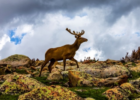 Deer at Rocky Mountain National Park