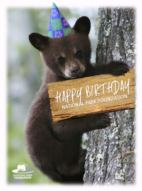 Bear wearing birthday hat