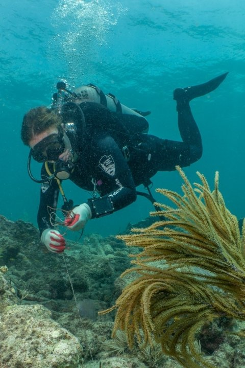 A person in scuba gear examines something along the sea floor