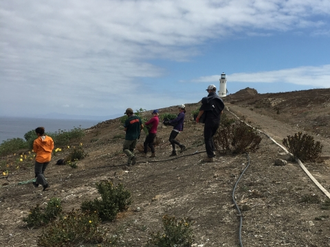 Ashley McEvoy and a group of volunteers carry bundles of native species to plant on a rocky shore