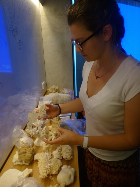 Dr. Veronica Radice organizes collected samples of coral in bags in a lab