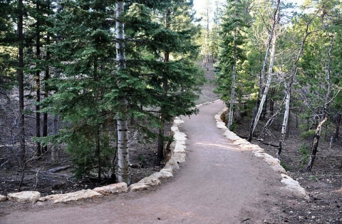 Grand Canyon wooded trail