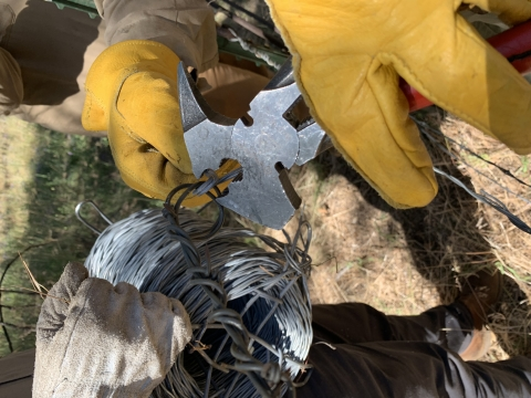 Close up of gloved hands trimming wire. Arizona Conservation Corps Ancestral Lands Crew 366 at Grand Canyon National Park