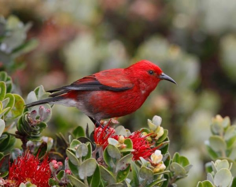 A small red bird perches atop red and yellow blooms and green leaves.