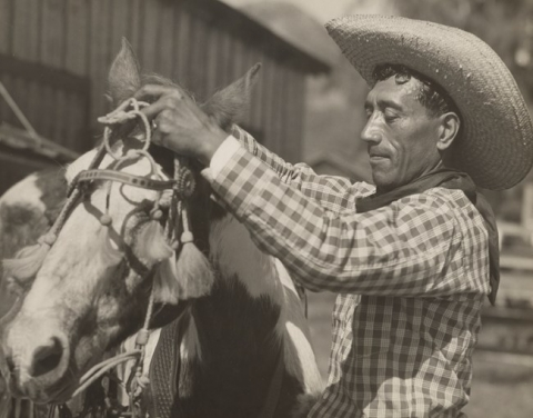 Sepia photo of a cowboy (paniolo) adjusting straps on his horse