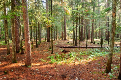 Forest floor at Katahdin Woods and Waters National Monument